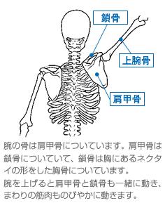 痛い 肩 と が 吸う 息 甲骨 を